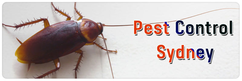 Pest Control Len Waters Estate