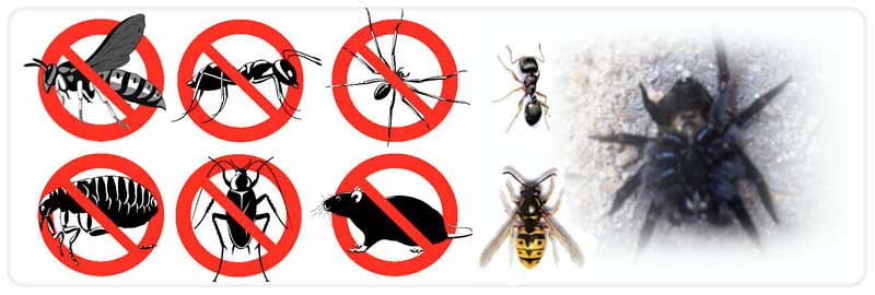 Pest Control Picketts Valley