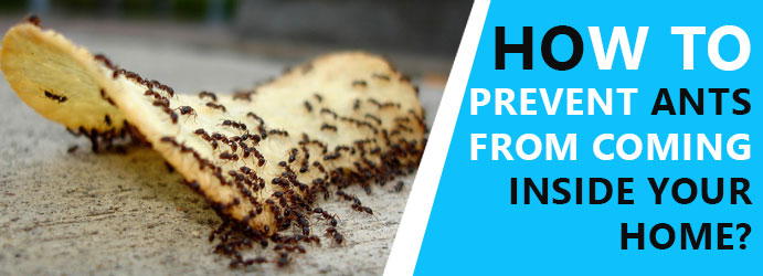 How to prevent ants from coming inside your home?