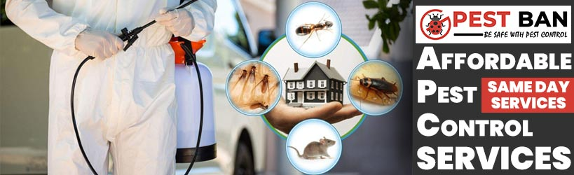 Affordable Pest Control Bungalora