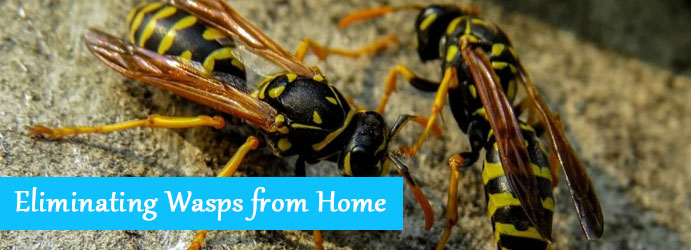 Eliminating Wasps from Home – A Quick Guide